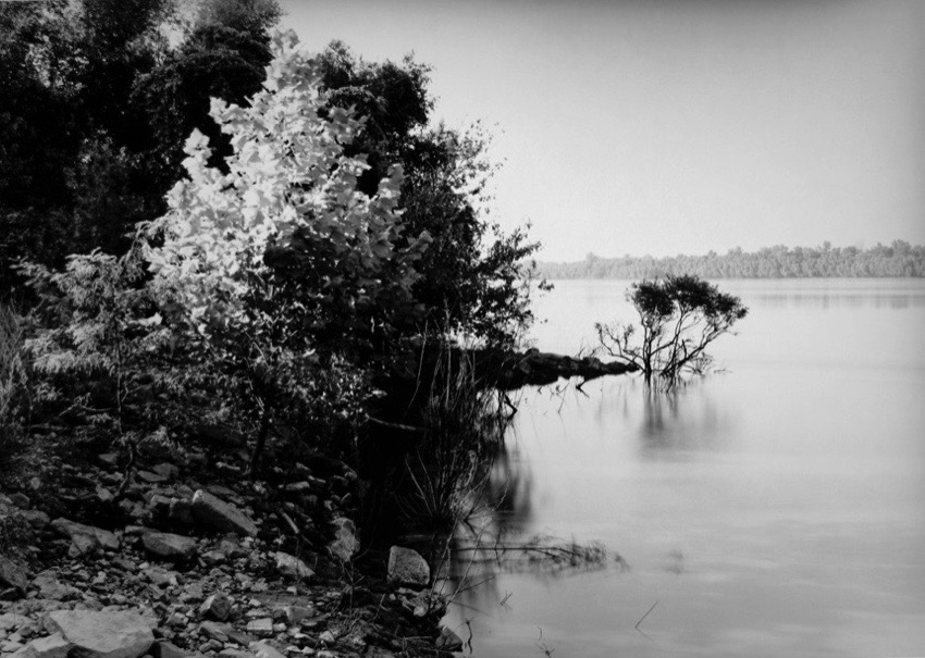 drowning trees Looking West-towards Exile and the so-called Indian Nations, The East Bank or the lower Mississippi River, Trail of Tears State Park, near Jackson, Cape Girardeau County, Mississippi, U.S.A.