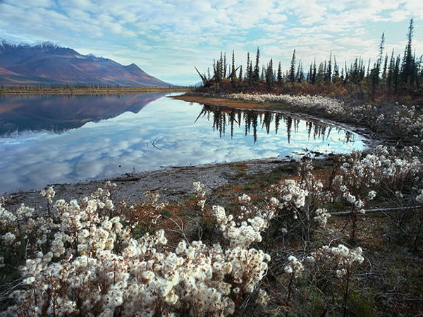 subhankar banerjee unnamed lake in the arctic national wildlife refuge